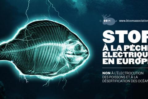 Veille  Faire interdire l'électrocution des poissons !