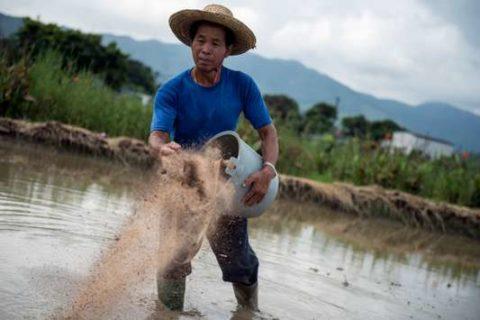VeilleUne agriculture 100 % biologique pourrait nourrir la planète en 2050