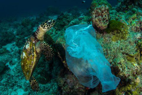 Veille  Sauvons la nature de la pollution plastique