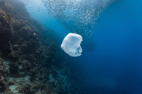 Veille Chaque année 600 000 tonnes de plastique sont rejetées dans la mer Méditerranée