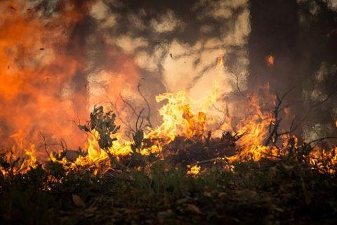 Veille  Les intérêts économiques derrière la destruction de l'Amazonie
