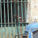 Veille  Guinée : des militants de l'UFDG en prison sans procès