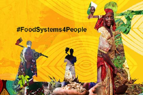 Veille  Sommet de l'ONU sur les systèmes alimentaires: Communiqué des mouvements sociaux