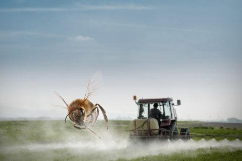 Veille   Initiative Citoyenne Européenne : Sauvons les abeilles et les agriculteurs!